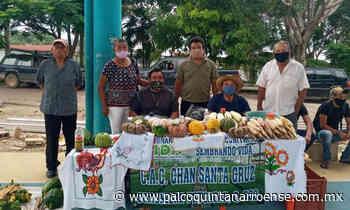Agricultores de Felipe Carrillo Puerto resienten afectación por la pandemia – Palco Noticias - Palco Quintanarroense