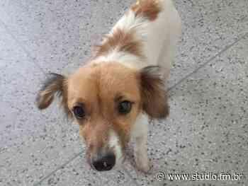 Idoso é flagrado estuprando cachorra em Sapucaia do Sul - Rádio Studio 87.7 FM   Studio TV   Veranópolis