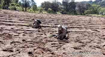 Plantan árboles en la aldea Santa Rita, La Esperanza, Quetzaltenango. - stereo100.com.gt