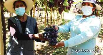 Certifican campos para agroexportación de uva de Moquegua - Diario Correo