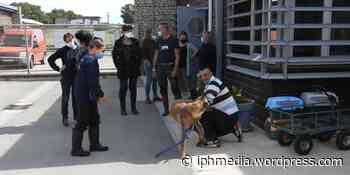 VILLENEUVE-LES-MAGUELONE : Un chien volé retrouve son maître à 500 kms. - IPH Média