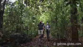 Conheça a Reserva Natural de Guaricica em Antonina; em 25 anos a região foi reconstruída ecologicamente - gshow