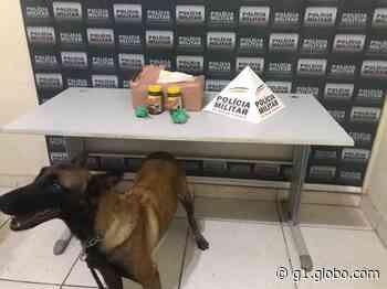 Polícia apreende drogas em encomenda entregue aos Correios de Governador Valadares - G1