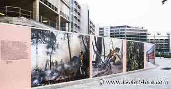Cesate rivestite a Milano Santa Giulia: la natura è in mostra - Il Sole 24 ORE