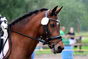 OEPS: nun doch lizenzfreie Bewerbe erlaubt!   Equestrian Worldwide   Pferdesport weltweit - EQWO - Equestrian Worldwide
