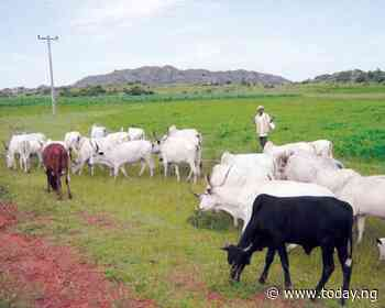 Northern governors agree to adopt ranching