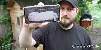 Tierquälerei in Siegburg: Kaninchen geköpft - Kölner Stadt-Anzeiger