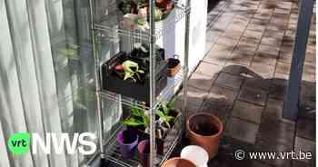 """Lydie uit Zwevegem zet plantjesruilkast voor haar woning: """"Een plantje nemen is een plantje geven"""" - VRT NWS"""