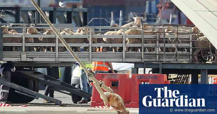 Australian observers likely to board just one live export ship in two years