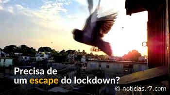 Cubanos criam pombos para se distrair no lockdown - HORA 7