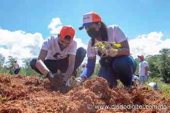Edesur siembra 4,800 plantas en los Mogotes de Villa Altagracia - DiarioDigitalRD