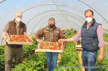 Ernte auf dem Spargelhof Winkelmann in Rahden-Tonnenheide hat begonnen – Auch Himbeeren und Heidelbeeren im Verkauf: Jetzt sind die Erdbeeren reif - Rahden - Westfalen-Blatt