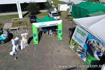 CastraPet garantiu a esterilização de mais de 700 animais em Piraquara - Bem Paraná - Bem Paraná