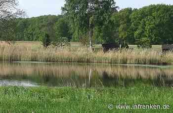 BN: Amphibienschutzanlage bei Volkach hat sich gelohnt - inFranken.de