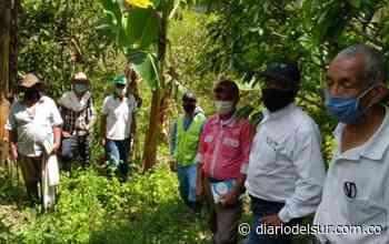 Boyacá: Pequeños productores agrícolas de Berbeo, se capacitan para fortalecer cultivos - Diario del Sur