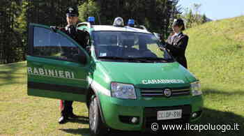 Incendio boschivo a Carsoli: 2 denunce - Il Capoluogo - Il Capoluogo