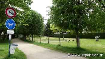 Bien-être animal: à Marolles-en-Brie, ils veulent un parc canin pour promener leur chien en liberté - Le Parisien