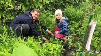 Natur: Kinder aus Neuenhagen erforschen das Erdreich - moz.de