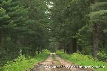Center Parcs : le projet du Rousset en Saône-et-Loire est maintenu - France 3 Régions