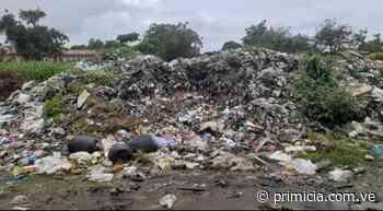 Vertedero de basura preocupa a vecinos de Inés Romero en San Félix - Diario Primicia - primicia.com.ve