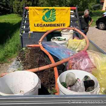 Legambiente ripulisce la spiaggia delle Rianne di Laveno: raccolti 36 chili di rifiuti - VareseNoi.it