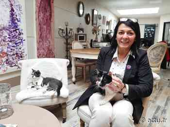 Eure. À Vernon, le bar à chats du centre-ville ouvrira (enfin) ses portes le 12 juin - actu.fr