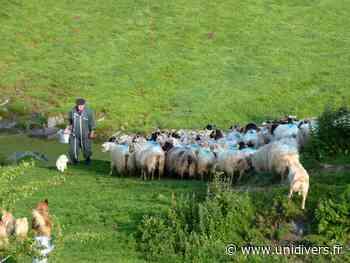Randonnée : rencontre avec un berger Saint-Jean-Pied-de-Port jeudi 8 juillet 2021 - Unidivers