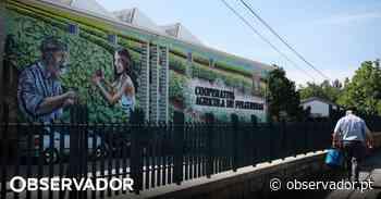 Covid-19. Cooperativa de Felgueiras distribui parte dos lucros por produtores e restaurantes - Observador