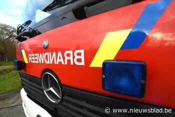 Brandweer blust haagbrand in Herk-de-Stad