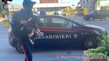 Entra in casa per rubare il cane: arrestato ladro ad Albignasego - Il Mattino di Padova