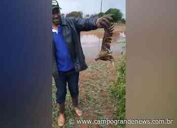 Temporal mata aves e polícia consegue resgatar quatro papagaios feridos - Campo Grande News