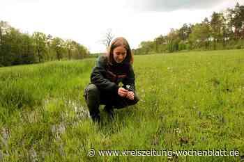 Flora- und Fauna-Kartierung belegt die positive Entwicklung der Biodiversität - Kreiszeitung Wochenblatt