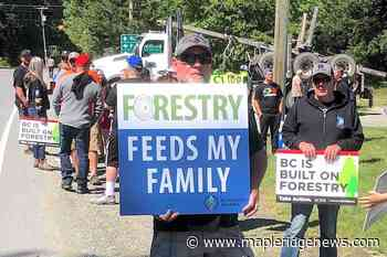 VIDEO: Vancouver Island loggers rally against Fairy Creek blockades – Maple Ridge News - Maple Ridge News