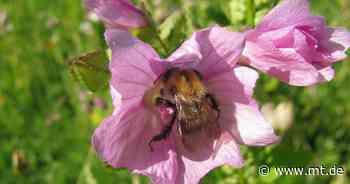 Insektenfreundliche Gärten: Naturschutzverein bietet Saatgut an - Mindener Tageblatt
