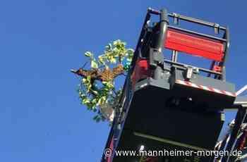 Feuerwehr Ladenburg rettet 20.000 Bienen - Ladenburg - Nachrichten und Informationen - Mannheimer Morgen