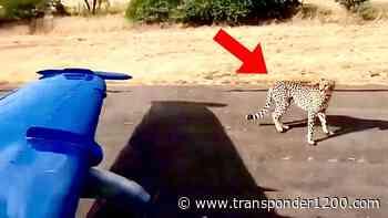 RELACIONADO Video | Chita a poco de impactar contra aeronave de combate en una pista - Transponder 1200 | Aviation News