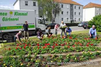 Freie Wähler Schriesheim pflanzen mehr als 700 Blumen - Schriesheim - Nachrichten und Informationen - Mannheimer Morgen