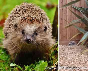 'Hedgehog highway' built at Thornbury housing development - South Cotswolds Gazette