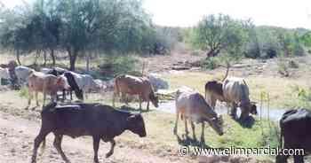 Aumenta desocupación del hato ganadero por sequía: UGRS - ELIMPARCIAL.COM