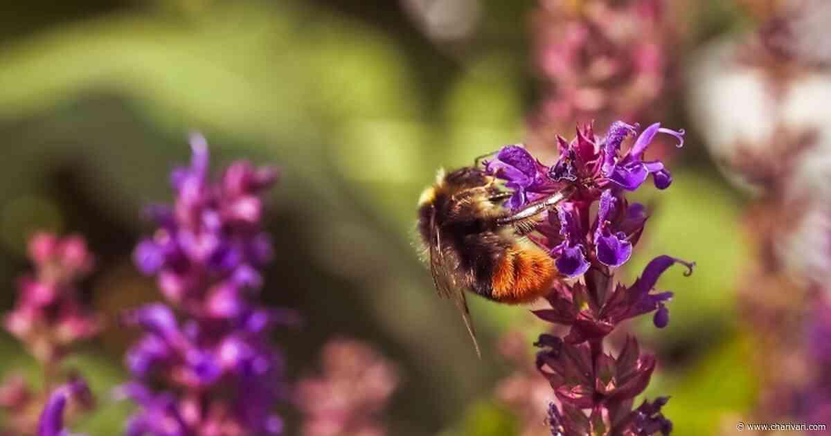 Gemeinde Zandt im Landkreis Cham setzt sich für Bienen ein | - Radio Charivari