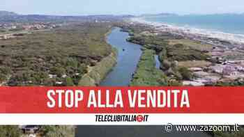 Pineta di Varcaturo | la Regione blocca la procedura di vendita - Zazoom Blog