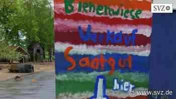 Paulo-Freire-Schule in Parchim: Hortkinder bieten am Verkaufsstand des Vertrauens Blumensamen an | svz.de - svz – Schweriner Volkszeitung