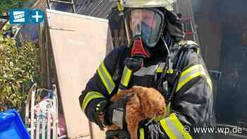 Harbecke: Feuerwehr rettet Hasen aus brennendem Schuppen - WP News