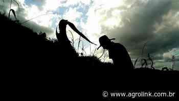 RS: projeto em Panambi busca conter êxodo rural entre jovens - Agrolink
