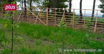 Selters Gesunde neue Wälder für Selters - Mittelhessen