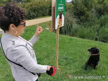 Bidart : les affiches de la campagne contre les crottes de chien lancée en mai 2021 presque toutes arrachées - Sud Ouest