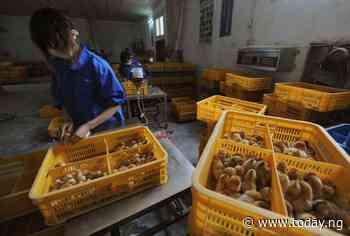 China reports first human case of H10N3 bird flu