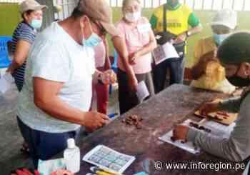 Huánuco: Cacaoteros son capacitados para incrementar su productividad - INFOREGION