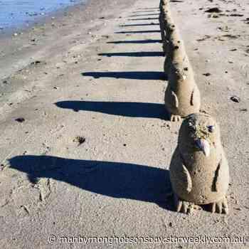 Penguins pop up at Altona beach | Maribyrnong & Hobsons Bay - Star Weekly