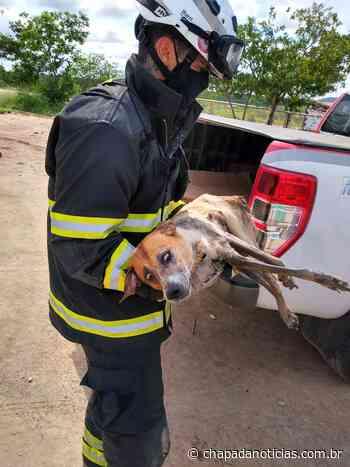 Bombeiros resgatam cachorro que caiu canal de esgoto em Itaberaba - chapada notícias